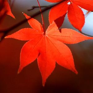 京都秋の紅葉